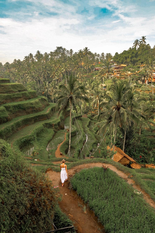 Tegalalang_Rice_Terraces_ubud_vandermeerkat_1