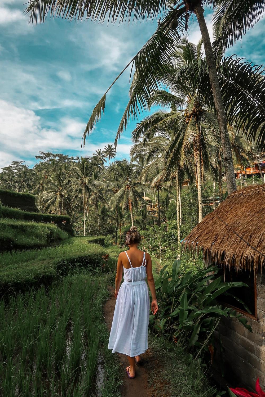 Tegalalang_Rice_Terraces_ubud_vandermeerkat_2